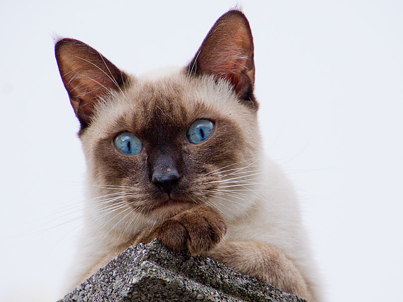 cat16g_120601.jpg