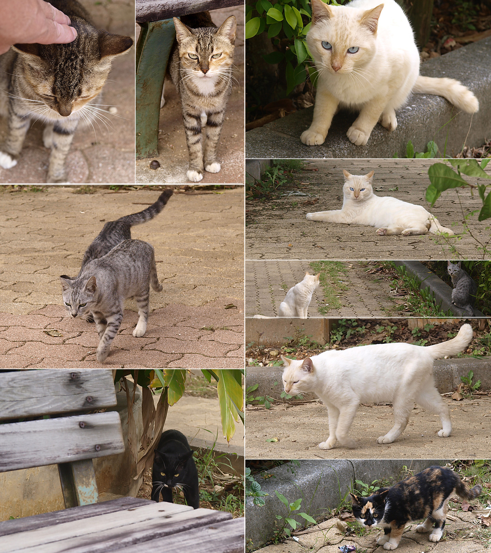cat_all_101109.jpg