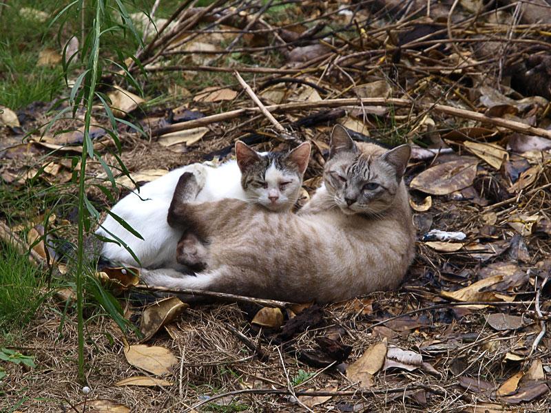 01_2cats_bise.jpg
