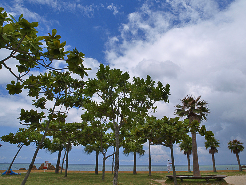 080725_04araha_tree.jpg