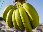 banana_2_070913.jpg